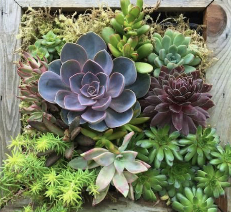 Living Succulent Wall Design Class In Oak Park At Wise Cup