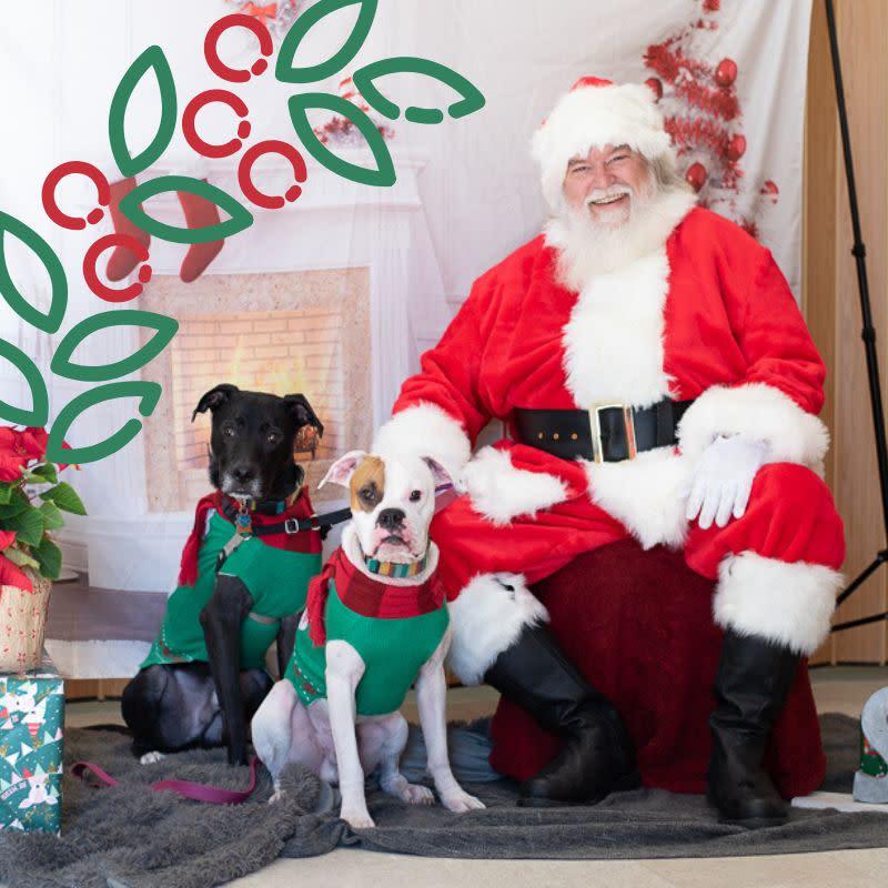 Santa Photos At Apa Thrift South In Austin At Austin Pets Alive